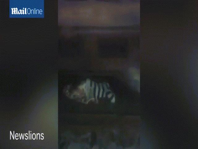 Video: Bà mẹ bị đoàn tàu 38 toa rầm rập chạy qua người