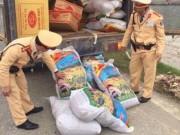 Thị trường - Tiêu dùng - Hạt hướng dương Trung Quốc tràn vào Việt Nam