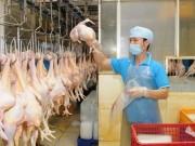 Thị trường - Tiêu dùng - Năm 2017 Việt Nam sẽ xuất khẩu thịt gà sang Nhật Bản, EU
