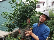 Tin tức trong ngày - Quất bonsai dáng gà tiến Vua gây sốt dịp Tết Đinh Dậu