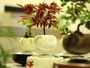 Tin tức trong ngày - Săn bonsai bay, xoay tròn trên không trung chơi Tết