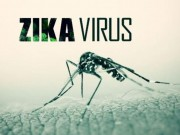Sức khỏe đời sống - Năm 2017, dịch bệnh do virus Zika sẽ không dừng lại