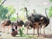 Du lịch - Một ngày chơi cùng chim khổng lồ ở Ba Vì