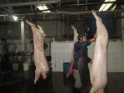 Thị trường - Tiêu dùng - Bất an với thịt heo bơm nước