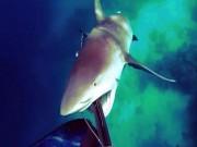 Thế giới - Hãi hùng cảnh cá mập điên cuồng tấn công thợ lặn ở Úc