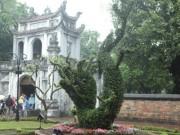 Tin tức trong ngày - Cận cảnh cặp rồng kết từ cây xanh ở Văn Miếu - Quốc Tử Giám