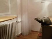 Tranh vui - Ảnh động: Cười ngất với đám động vật nghịch ngợm