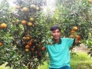 Thị trường - Tiêu dùng - Cam tiến vua xứ Bắc cho quả ngọt trên cao nguyên