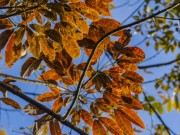 Đẹp ngẩn ngơ mùa cao su trút lá