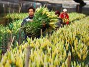 Tin tức trong ngày - Thời tiết đỏng đảnh, hoa ly Tây Tựu vào kho lạnh chờ Tết