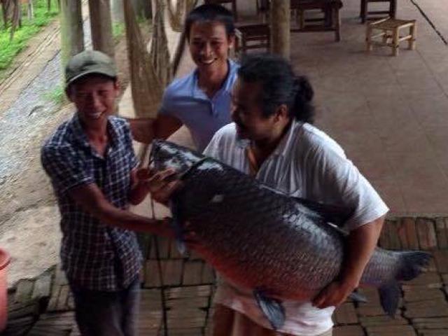 """Cần thủ kể chuyện """"săn"""" cá trắm đen 35kg ở hồ Hà Nội"""