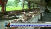 Bổ sung Cysteamine vào danh mục chất cấm trong chăn nuôi