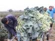 Thị trường - Tiêu dùng - Mê Linh - Hà Nội: Nông dân  khóc ròng  vì rau... được mùa