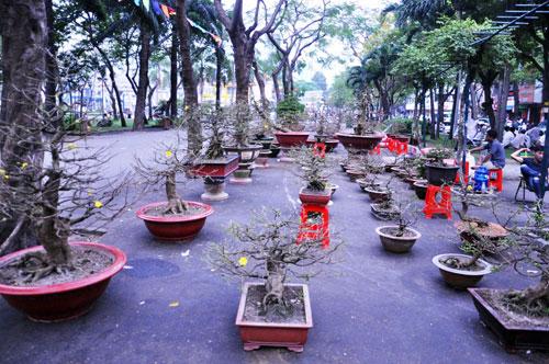 """Ngắm mai """"hái đồng"""", mai """"độc thủ đại hiệp"""" ở chợ hoa Tết Sài Gòn - 9"""