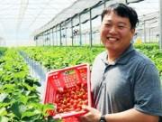 Người Hàn trồng dâu tây tại Đà Lạt
