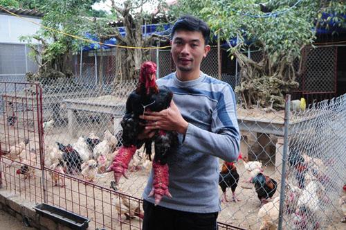 Ngắm cặp gà Đông Tảo có đôi chân đẹp nhất Việt Nam - 8