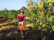 Tài chính - Bất động sản - CEO bỏ lương trăm triệu làm nông dân