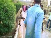 Ấn Độ: Cho ăn rồi tát cú trời giáng vào giữa mặt khỉ