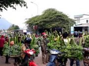 Cận Tết, thâm nhập  thủ phủ  chuối mốc Quảng Trị