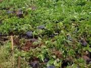 An ninh Xã hội - Đòi nợ bất thành, chủ nợ phá nát vườn hoa của con nợ