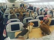 Thế giới - Hoàng tử Saudi mua vé máy bay cho 80 con chim ưng
