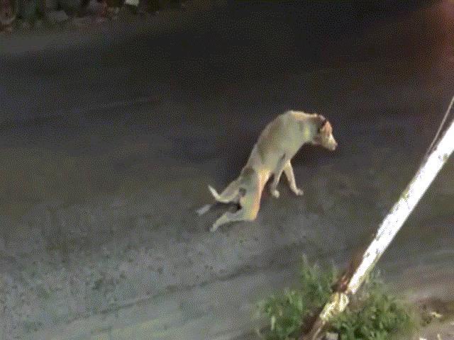 Clip: Chú chó lê lết bằng hai chân và cái kết