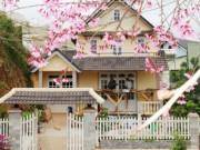 Lâm Đồng bất ngờ hủy lễ hội hoa mai anh đào