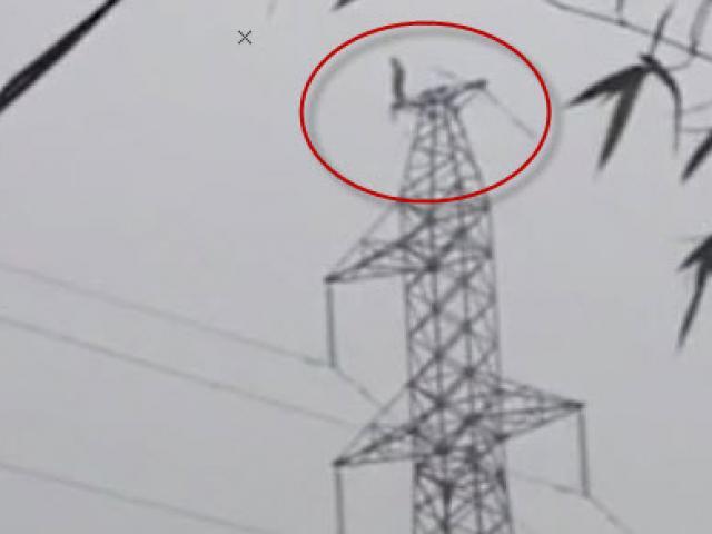 Thót tim thanh niên quậy trên cột điện cao thế ở Phú Thọ