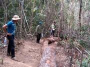 An ninh Xã hội - 20 lâm tặc dùng súng cướp lại gỗ lậu