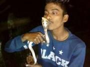 Ấn Độ: Hôn rắn hổ mang để chụp ảnh, hối không kịp