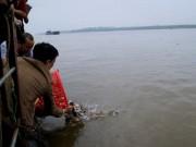 """Tin tức trong ngày - Đã xác định loại cá phóng sinh nghi """"cá ăn thịt"""" ở Sông Hồng"""