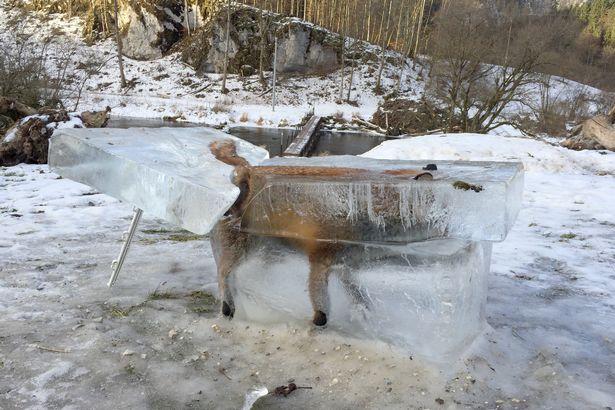 Lao xuống hồ lạnh cóng, chim bói cá đông cứng trong băng - 4