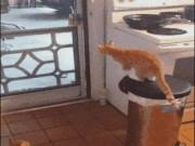 """Tranh vui - Ảnh động: """"Chết ngất"""" với lũ mèo này mất"""