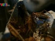 Kẹo bọc côn trùng - quà tặng độc đáo cho mùa Valentine