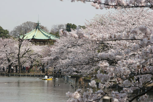 Nô nức mùa Lễ hội hoa anh đào Nhật Bản - 1