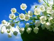 Thị trường - Tiêu dùng - Choáng với 8 loài hoa đắt đỏ nhất hành tinh