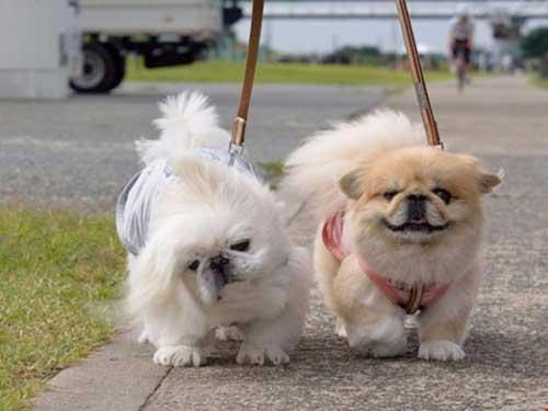 Muốn nuôi chó phải thông báo với UBND xã - 1