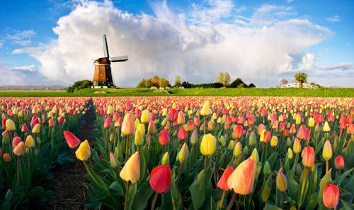 Lễ hội hoa xuân lớn nhất Thế giới sắp khai mạc - 1