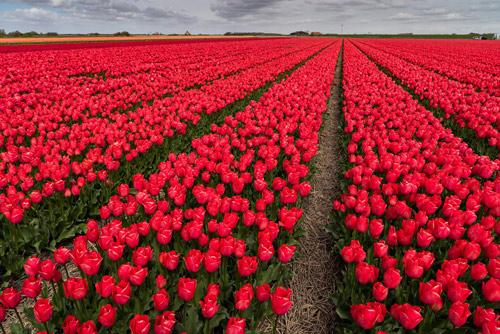 Lễ hội hoa xuân lớn nhất Thế giới sắp khai mạc - 2