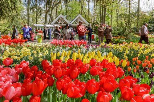 Lễ hội hoa xuân lớn nhất Thế giới sắp khai mạc - 3