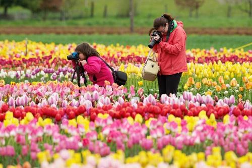 Lễ hội hoa xuân lớn nhất Thế giới sắp khai mạc - 4
