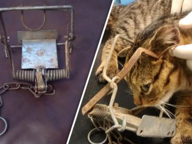 Mèo bị kẹt trong sàn xi măng, quá béo nên không thể chui ra - 3