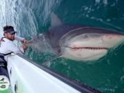Thế giới - VĐV cử tạ Mỹ đối đầu cá mập bò khổng lồ giữa đại dương
