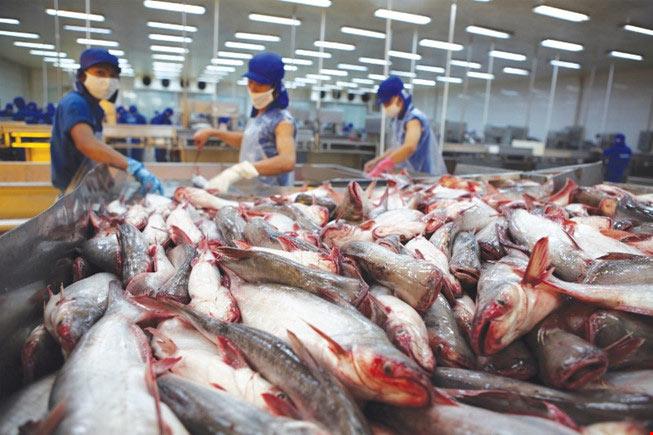 Tập đoàn bán lẻ lớn nhất châu Âu nói gì về cá tra Việt? - 1
