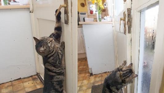 Mèo đứng 2 chân, mở cửa như người để chuồn đi chơi