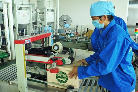 Hạt gạo Việt đang bị giấy phép 'trói chân trói tay' - 2