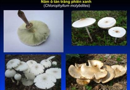 Những loại nấm bạn nên tránh xa nếu không muốn hại gia đình - 4