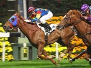 Tài chính - Bất động sản - Ai được kinh doanh đua ngựa, đua chó?