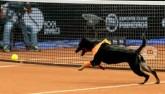 """Tennis """"dị"""": Phục vụ siêu sao bằng chó hoang"""