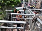 Tin tức trong ngày - Chủ tịch TP.HCM truy vụ rào chắn vỉa hè như chuồng thú